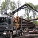 Rast proizvodnje i prodaje šumskih sortimenata