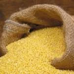 Bekavac: Stanje kukuruza nagovještava dobre prinose
