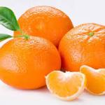 Povećan prinos mandarina