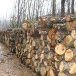 Od prodaje drvnih sortimenata 890.000 KM