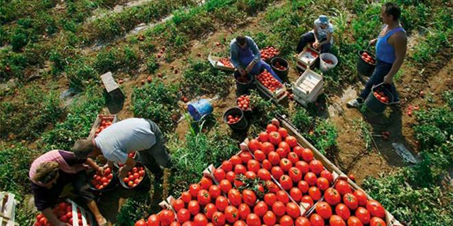 Sa niskim cijenama postali lideri: Cijeli Balkan jede paradajz iz Albanije