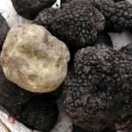 Najskuplja gljiva na svijetu neće biti uzgajana u RS