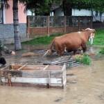 Potrošeno 100 tona stočne hrane