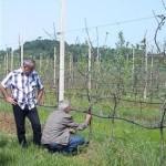 Vremenski uslovi nepovoljni za voćnjake