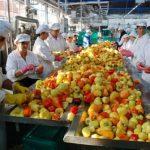 Proizvodnja u prerađivačkoj industriji povećana za gotovo šest odsto