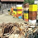 Poplava odnijela med