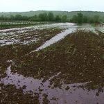 Poljoprivrednici traže hitnu akciju Vlade Srpske