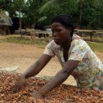 Raste inflacija u zemlji kakaa