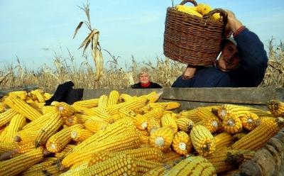 """""""Dani polja kukuruza"""" danas u Drakseniću"""