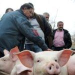 »Mršava« potražnja za tovnim svinjama