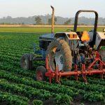 Uplaćen preostali dio podsticaja za poljoprivrednu proizvodnju za 2015. godinu