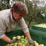Izvoz u Rusiju iz BiH skočio za 27 odsto