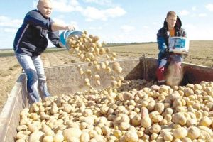 Izvoz u Hrvatsku pao za 234 miliona
