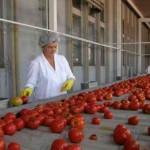 Otkupili 920 tona povrća