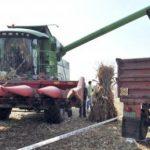 Umjesto kukuruza beru gubitke