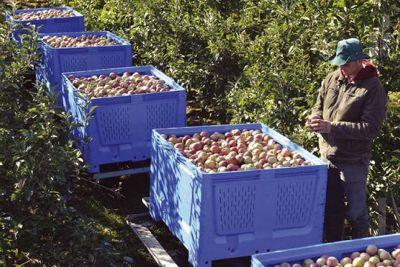 Sve spremno za dolazak ruske fitosanitarne inspekcije
