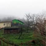 Rekultivisano više od osam hektara rudničkog prostora