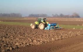Strna žita će u zimu ući u različitim fazama vegetacije