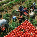 Predstavnici institucija se sastali sa proizvođačima voća i povrća