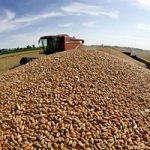 RS: Vrijednost proizvodnje pšenice veća od 67 miliona KM
