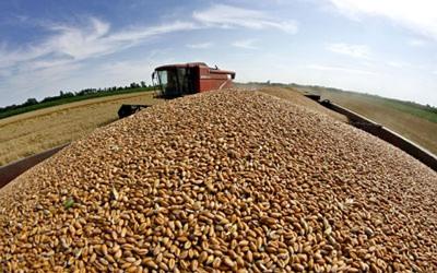 Robne rezerve Srbije razmjenjuju merkantilnu za sjemensku pšenicu