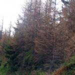 ALARMANTNO: Šume Srpske se suše!