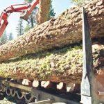 Šumska gazdinstva polugodište završila milionskim gubicima