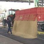 U brčanskoj fabrici BIMAL počeo prijem soje sa domaćih polja