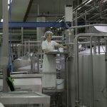 Prepolovljen izvoz mlijeka iz BiH