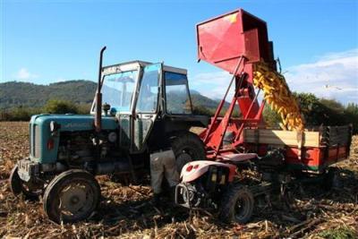 Bratunac: Zakasnjela berba kukuruza odgađa jesenju sjetvu
