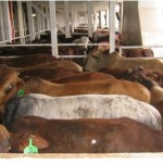 Poljoprivrednici u BiH traže imena onih koji su nelegalno izvozili meso u Tursku