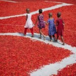 Suše najljuću čili papričicu na svijetu za manje od dolara