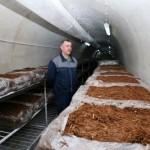 Prijedor: Šampinjoni se šire tunelima rudnika Ljubija