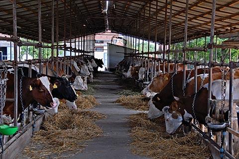 """""""Farmland"""" pored milionskih podsticaja u gubitku šest miliona KM"""
