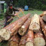 """""""Šume Srpske"""" zapošljavaju još 70 radnika"""
