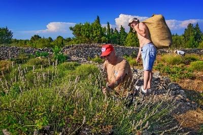 Posustaje izvoz gljiva i ljekovitog bilja