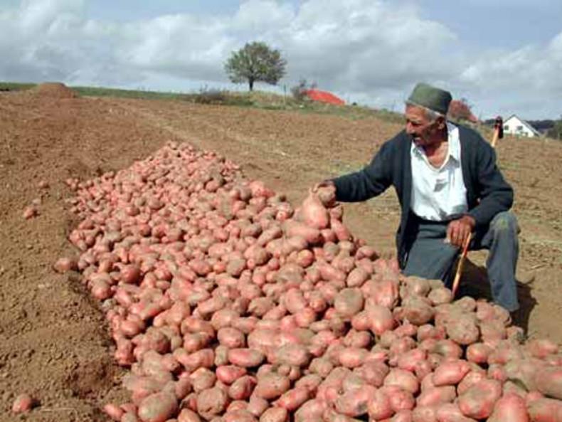 Krompir u Hrvatskoj drastično poskupio za godinu dana
