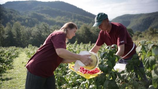 Uz podršku razvijeni poljoprivredni posjedi