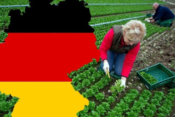 Rast njemačke ekonomije, problem privrednicima i političarima