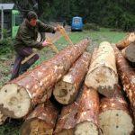 Proizvodnja šumskih sortimenata veća za 42,53 odsto