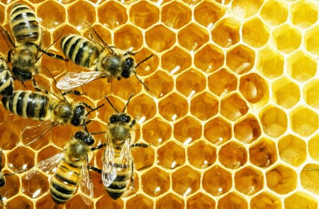 Упозорење пчеларима у Новом Саду и Беочину
