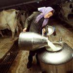 Manji otkup mlijeka na području Novog Grada