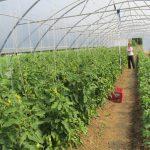 Razvoj plasteničke proizvodnje u Lukavcu, i dodatna zapošljavanja