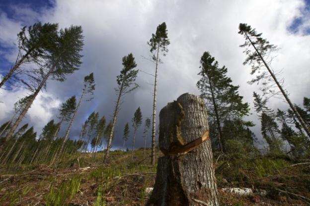 Načelnici obavijestili Vladu RS o sušenju šuma na Romaniji