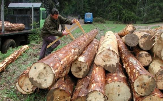 """Pobjeda sindikata: Slijedi povećanje plata u """"Šumama RS"""""""