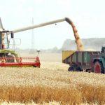 Pašalić: Očekuje se natprosječan prinos pšenice