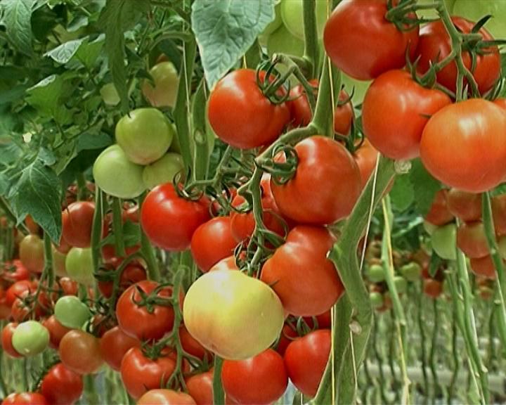 Goražde: Zbog podsticaja poljoprivrednici razmišljaju o brisanju iz registra