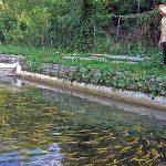 Mala pomoć i izvozne kvote potapaju ribnjake