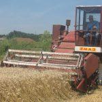 Zvornik: Pšenica požnjevena na 85 odsto površina