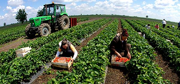 Pale: Registrovano 556 poljoprivrednih gazdinstava